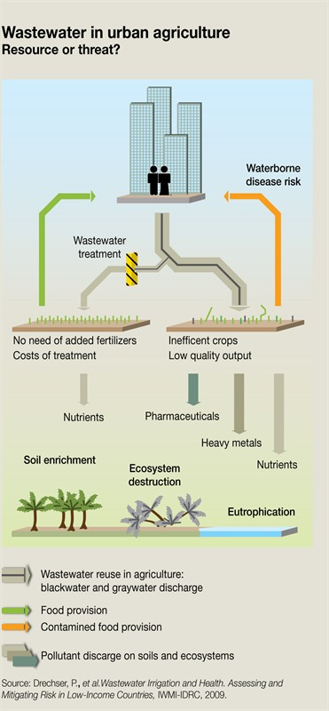 wastewater-in-urban-agriculture-resource-or-threat